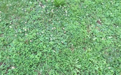 Pre-Emergent Weed Control (For More Than Just Crabgrass)